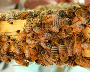 doral bee removal